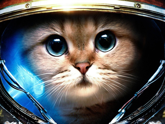 This is one of my favorites; Starcraft Kitteh...